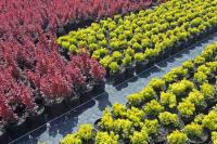 DEBSCY nursery coniferous and deciduous trees and bushes in Poland